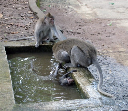 Mother bathing infant in Ubud Monkey Forest, Bali