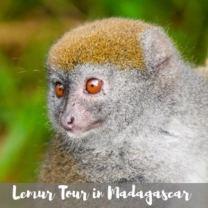 see lemurs in madagascar