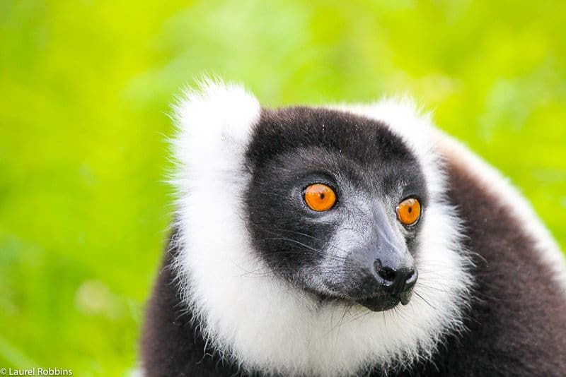 ecotour to see lemurs in Madagascar
