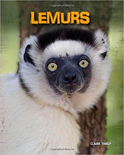Lemurs Living in the Wild Primates by claire throp