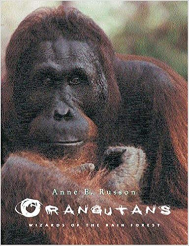 Orangutans Wizards of the Rain Forest by anne russon