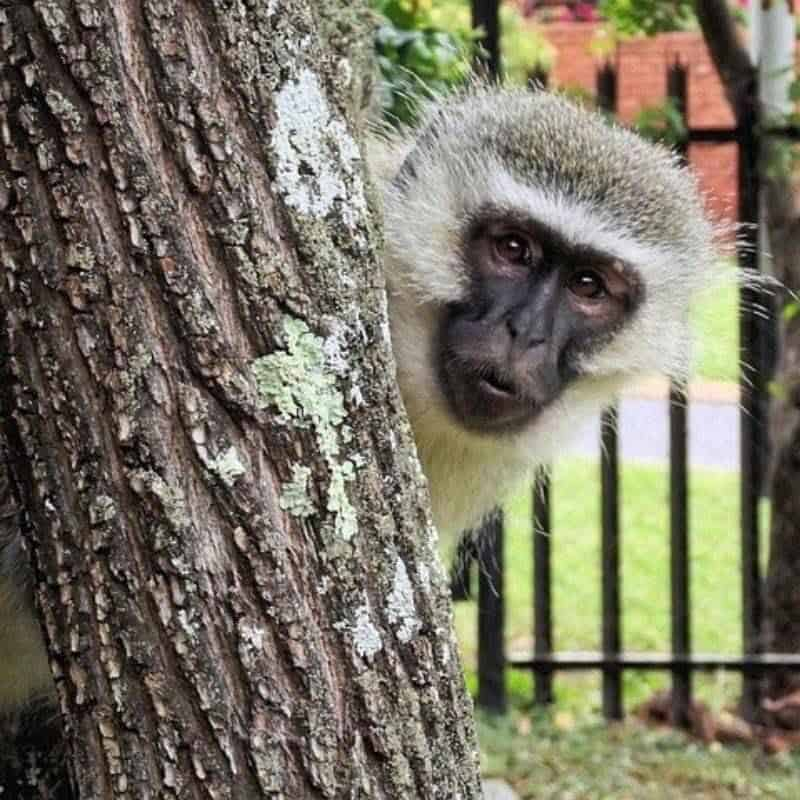 photos of cute primates